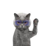 El gato lindo en vidrios le está saludando Imágenes de archivo libres de regalías