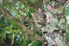 El gato lindo está mintiendo en el árbol, pequeño gatito en una rama, los animales domésticos lindos tiene tres colores en un fon fotografía de archivo libre de regalías