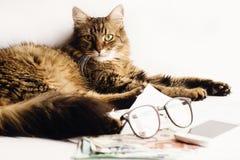El gato lindo que se sienta en la tabla con los vidrios llama por teléfono y dinero, trabajando imagen de archivo libre de regalías