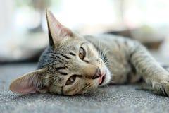 El gato lindo se acuesta en el piso fotografía de archivo