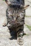 El gato lleva un pájaro Imágenes de archivo libres de regalías