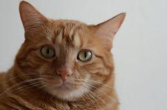 El gato más interesante del mundo Fotos de archivo