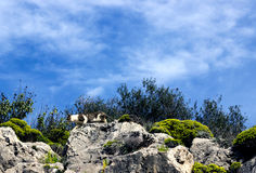 El gato manchado se escabulle abajo de la ladera Foto de archivo libre de regalías