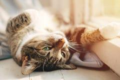 El gato miente cerca de la ventana imagenes de archivo