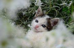 El gato miente en flores Foto de archivo libre de regalías