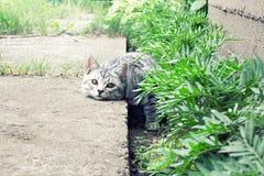 El gato miente en hierba verde en el fondo del jardín del verano Imagen de archivo libre de regalías