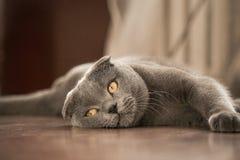El gato miente en el piso fotografía de archivo libre de regalías