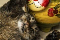 El gato miente en el suyo detrás al lado de un gato del juguete Los abrazos de un gato de la pata juegan Foco selectivo foto de archivo libre de regalías