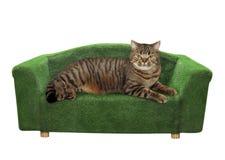 El gato miente en un diván verde foto de archivo