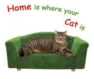 El gato miente en un diván verde 2 imagen de archivo
