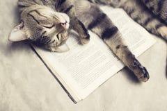 El gato miente en un libro imagenes de archivo
