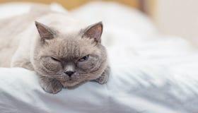 El gato miente en una cama y la mirada con interés fotografía de archivo libre de regalías