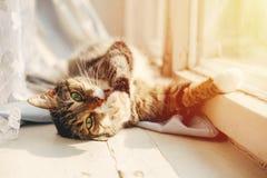 El gato miente y lava las patas imagen de archivo