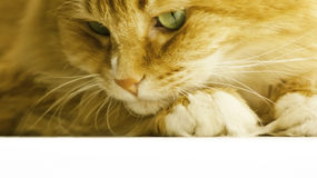 El gato mira abajo Foto de archivo libre de regalías