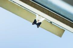 El gato mira abajo del balcón Fotografía de archivo libre de regalías