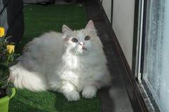 El gato mira de cerca la lente de cámara gaze imagenes de archivo