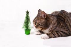 El gato mira el juguete, árbol de navidad Imagen de archivo libre de regalías