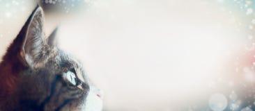 El gato mira la luz Ciérrese para arriba del ojo de gato, vista lateral Foto de archivo