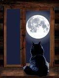 El gato mira a través de la ventana la Luna Llena Imágenes de archivo libres de regalías
