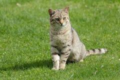El gato nacional Fotografía de archivo libre de regalías