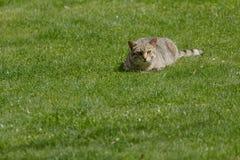 El gato nacional Imágenes de archivo libres de regalías