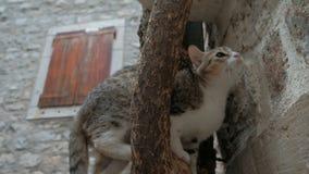 El gato nacional subió el árbol en la ciudad almacen de metraje de vídeo