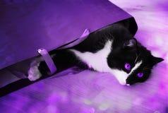 el gato Negro-blanco con la violeta observa en la iluminación de la lila con el patc Fotografía de archivo