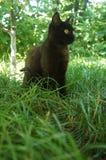 El gato negro con amarillo observa entre la hierba Imágenes de archivo libres de regalías