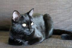 El gato negro con amarillo observa la mentira en un sofá Imagen de archivo