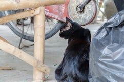 El gato negro está mirando fijamente algo foto de archivo