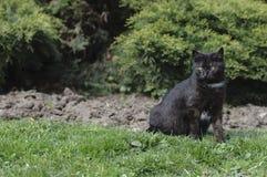 El gato negro está presentando Imagen de archivo libre de regalías