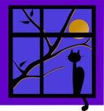 El gato negro fuera de la ventana con la luna Foto de archivo libre de regalías