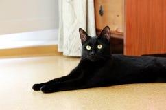 el gato negro joven hermoso miente en piso del corcho en el apartamento Fotos de archivo