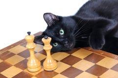 El gato negro que miente en el tablero de ajedrez mira las figuras Imagen de archivo