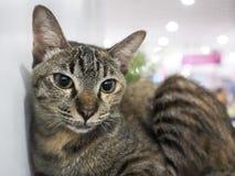 El gato no identificado en jaula encuentra un nuevo hogar imagenes de archivo