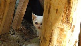 El gato oculta detrás de la colmena imagenes de archivo