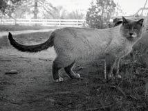 el gato parece el león foto de archivo