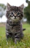 El gato parece sorprendido Imagen de archivo