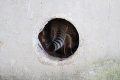 el gato perdido rayado desaparece en el agujero que ése lleva al sótano de una casa Fotos de archivo libres de regalías
