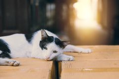 El gato perezoso coloca sobre la caja de papel Imagenes de archivo