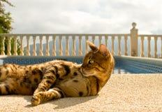 El gato perezoso de Bengala miente comfortablemente cerca de la piscina Imagen de archivo