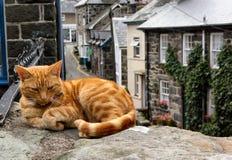 El gato perezoso del jengibre Imágenes de archivo libres de regalías