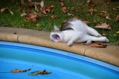 El gato perezoso miente y bosteza cerca de la piscina imagen de archivo libre de regalías
