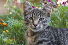 El gato perezoso se sienta en flores Fotografía de archivo