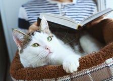 El gato pone en cama del animal doméstico con el libro de lectura del muchacho Foto de archivo libre de regalías