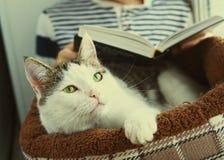 El gato pone en cama del animal doméstico con el libro de lectura del muchacho Imagenes de archivo