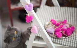 El gato que consiguió el tiro foto de archivo libre de regalías