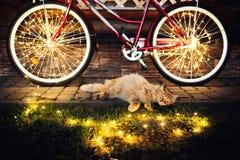 El gato que descansa sobre el césped con una bicicleta rodeada por la luz, relaja la imagen foto de archivo libre de regalías