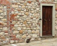 El gato que espera Foto de archivo libre de regalías