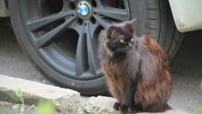 El gato que la naturaleza marrón negra de BMW sale de la planta de sol del fondo proviene el viento de la primavera del verano de almacen de metraje de vídeo